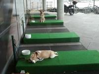 Парковки для собак